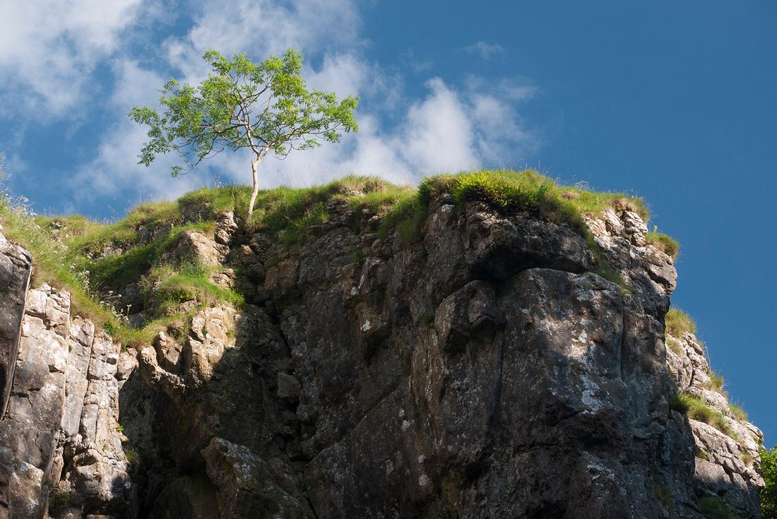 Tree at Gordale Scar