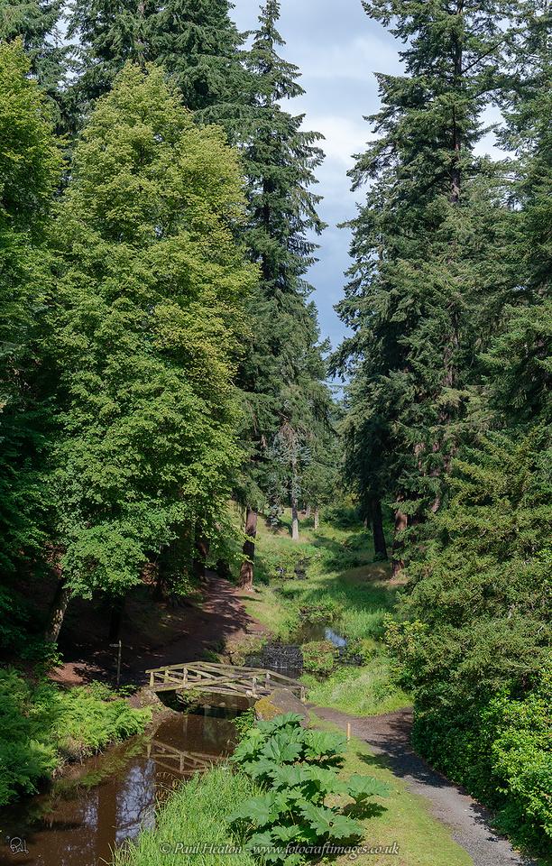 Cragside pinetum photograph