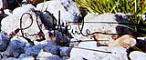 paul heaton signature on box frame print
