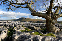 Ingleborough from Twistleton Scar