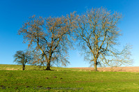 Yorkshire Wolds trees