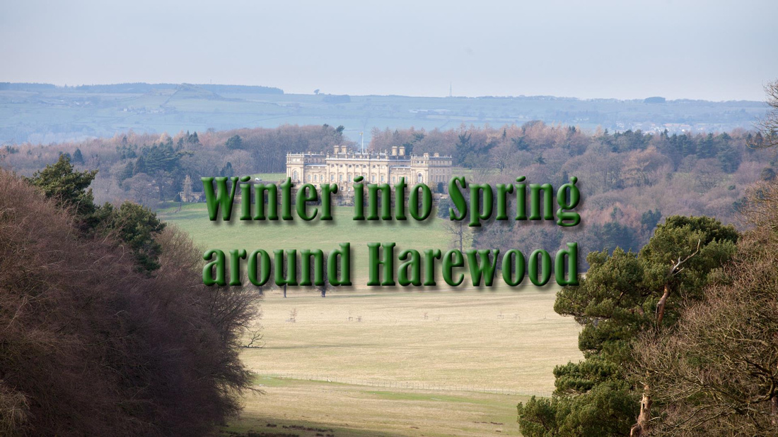 Winter into Spring Around Harewood