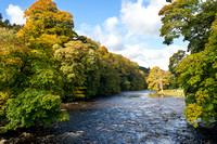 Autumn View of Strid Wood, Wharfedale